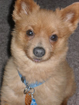 Toady - Adopted March 23, 2010
