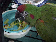 Macaw Diets