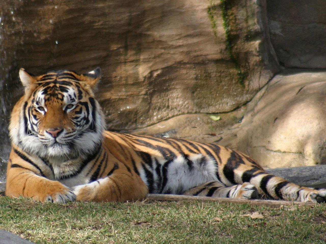 http://3.bp.blogspot.com/_KafQpwsq4TA/S9Cdr7_pnzI/AAAAAAAAIdI/TCE0wLvxAoI/s1600/papel-de-parede-animais-09.jpg