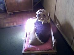 mi mascota/ chispon
