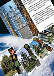 Guía fotográfica de algunos árboles de la Ciudad de México