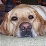 My Pups: