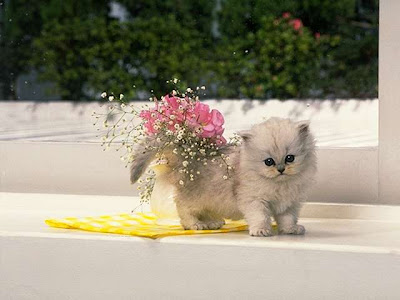 All Cute Cats: Cat & Flowers
