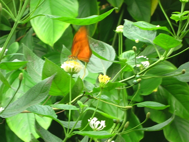 orange brown butterly on green leaves