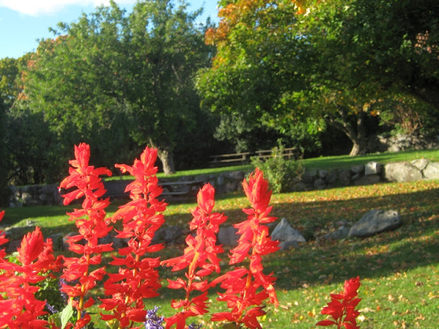 photo of autumn trees with red flowers in close up by Susan Wellington