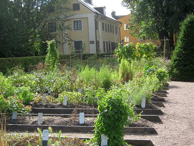 photo of Linnaeus garden in Uppsala Sweden by Susan Wellington