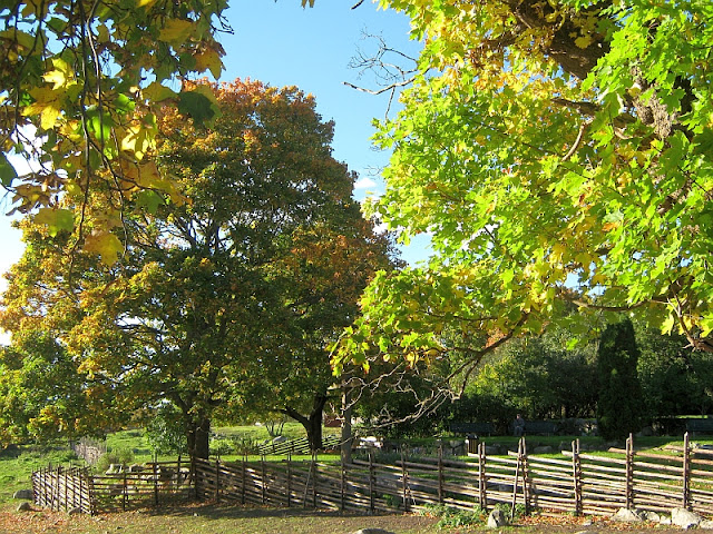photo of autumn trees with blue sky by Susan Wellington