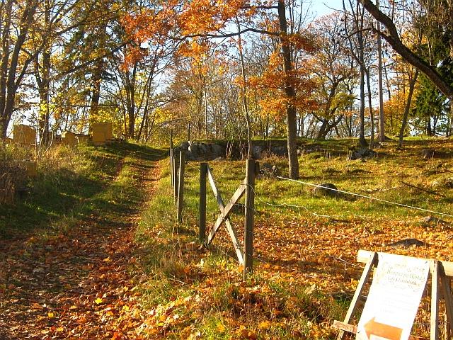 forest in autumn in stockholm sweden