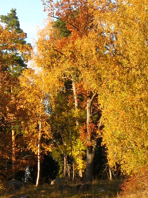 photo of autumn trees in forest