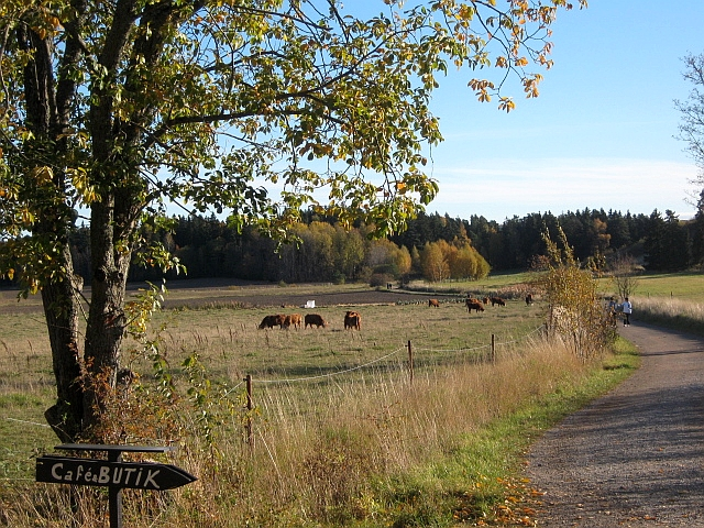 pastoral countryside in Stockholm Sweden