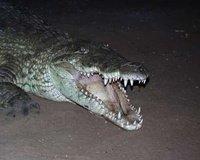 Mr. Al E. Gator