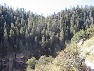 Forested Slopes of Walnut Canyon