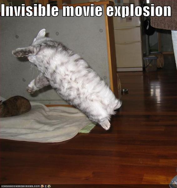 [funny-pictures-stunt-cat.jpg]