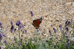Für Schmetterlinge