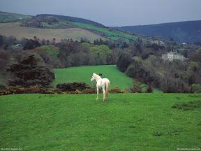 Horses   nature desktop wallpapers Images Photos