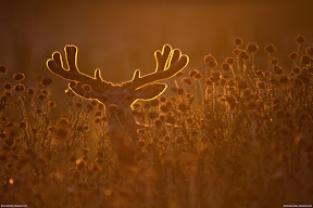 Various Wildlife | nature desktop wallpapers Images Photos