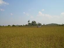 Cambodia December 2009: