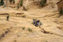 PERU: August 7 - 20, 2010