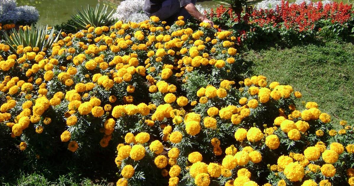 Paisaje bitacora curso de jardiner a y paisajismo for Curso de jardineria
