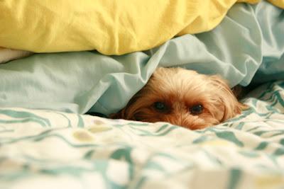 Dog Electric Blanket Uk