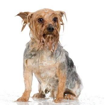 Healthy Wet Dog Food For Small Dogs