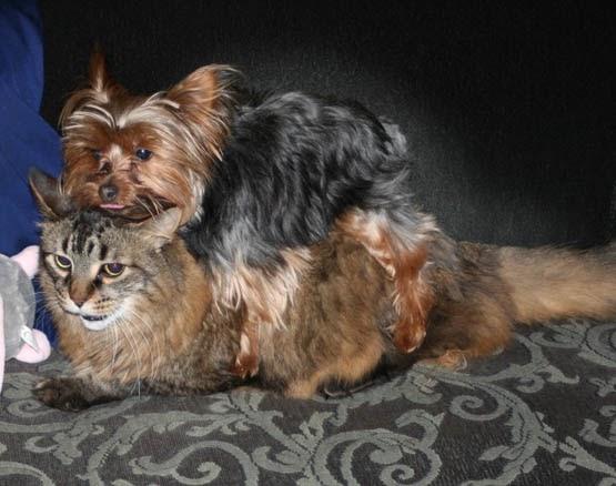 Cat Dog Black Without Background