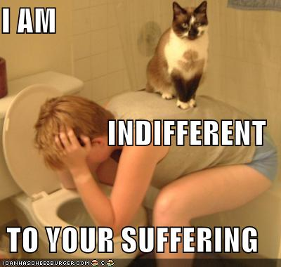 Et c'est reparti pour 365 jours .... Funny-pictures-cat-on-vomiting-person