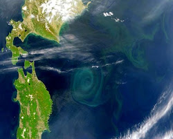 La gran Sopa de plastico del Pacifico