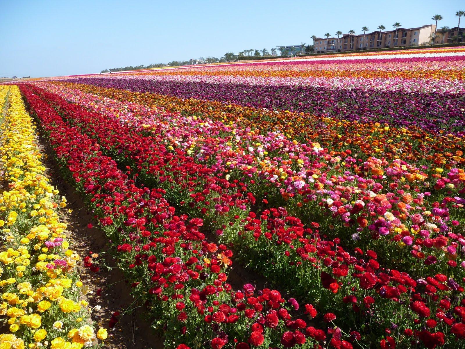 Flower Gardens,