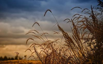 llegó el tiempo de la cosecha la vida fluyó con el ciclo de las ...