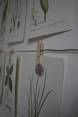 Florabilder