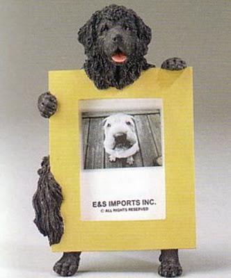 Funny Newfoundland Dog Poster