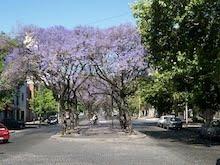 Las calles de La Plata