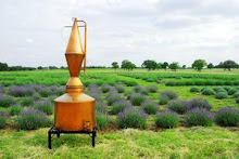 The Old Copper Distiller for Essential Oil of Lavender