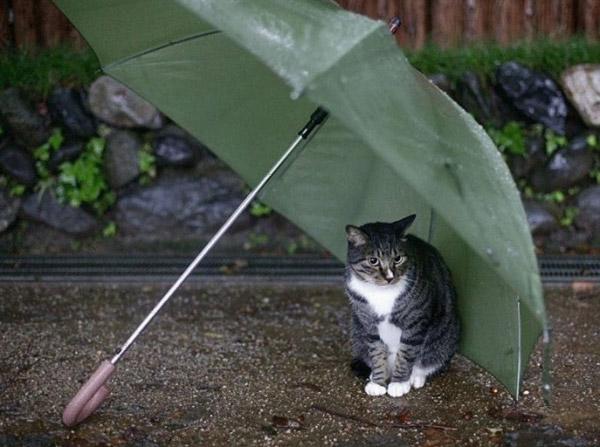 No deixis que passin fred. Fes-te soci o voluntari d'aguna protectora.
