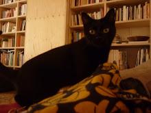 Belle ,la companya de la Pearl : Vacances peludes. Agost, 2010.