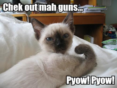 sample cover letter resume_05. funny pictures of cats with guns. before sunday comes caturday; before sunday comes caturday. superleccy. Oct 24, 05:03 PM. QuickTime now 64-bit!