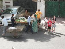 Vegetable Walli