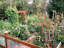 My 2008 Garden