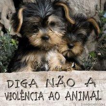 VIOLENCIA AO AMINAL