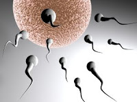 azoospermie stérilité traitement naturel