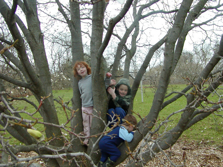 3 kids in a tree
