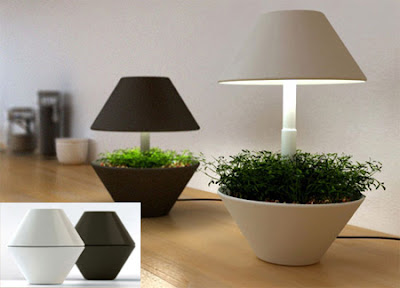 beautiful Plants Light pot