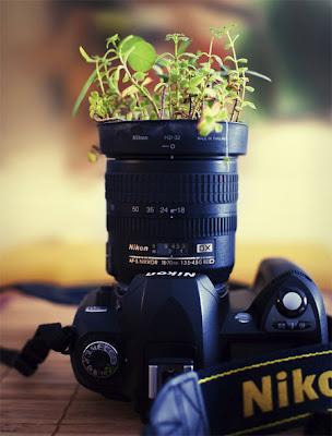 Creative Nikon Camera Plant Pot