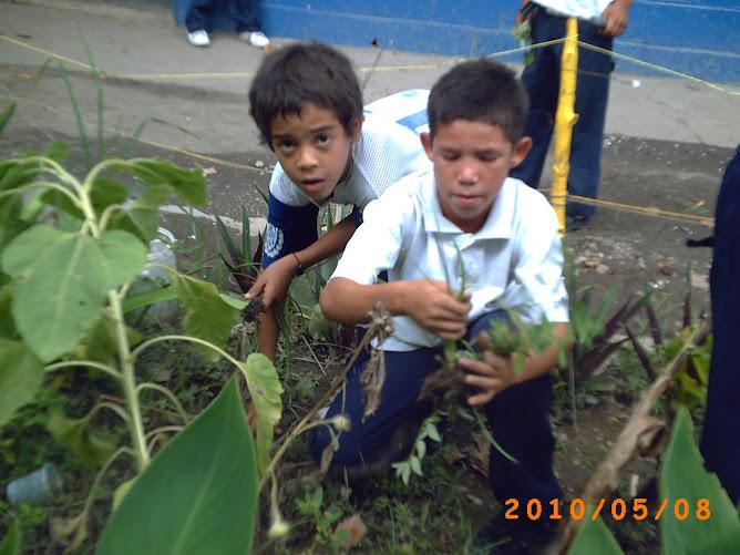 Rusbert y José limpiando el huerto