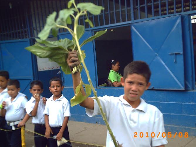 José con resto de planta para abomo orgánico
