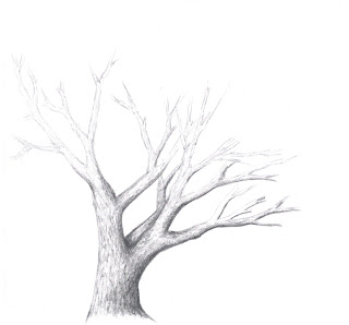how to draw a tree without leaves step by step