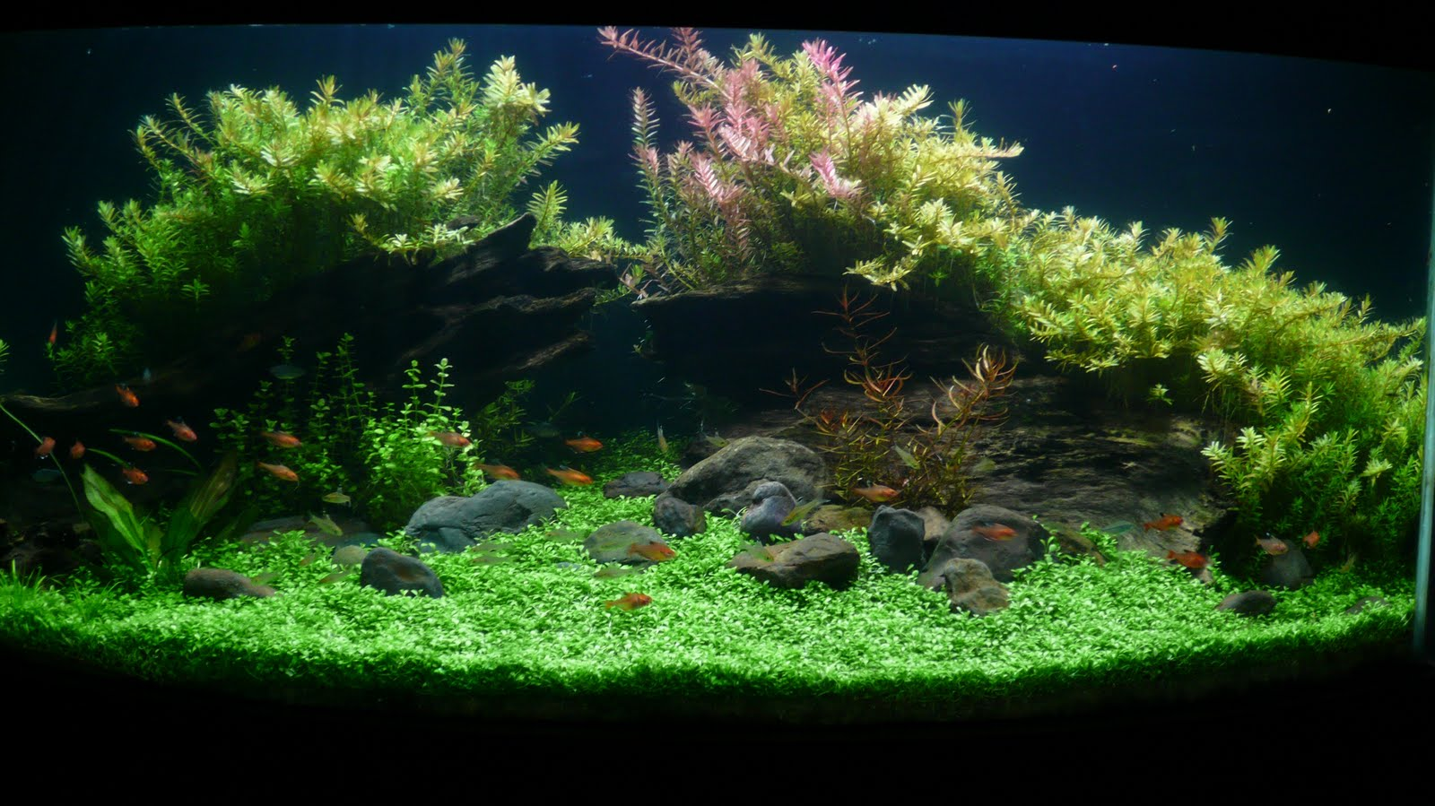 AFFABLE AQUARIUM: woody aquascape
