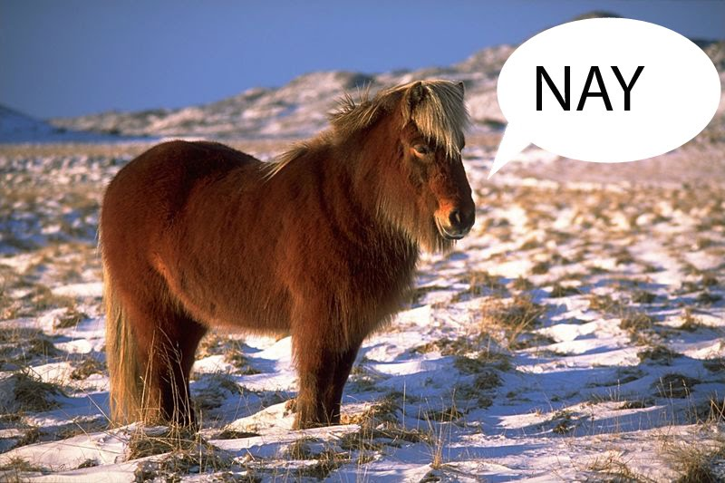 horse saying nay
