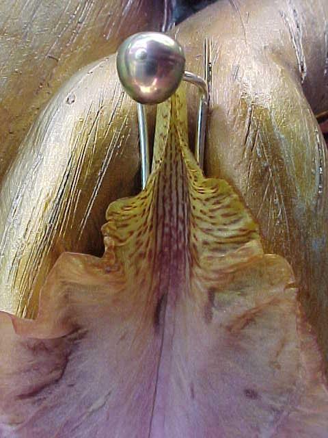 Crown richmond swinger